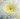 Chrysanthemum – Apulia Plants
