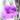Eremophila – apulia plants