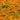 LAMPRANTHUS – apulia plants