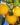 Limone – Apulia Plants