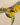 opuntia – apulia plants
