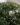 mirto – apulia plants
