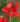 canna-indica – Apulia Plants
