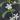 philoteca – apulia plants
